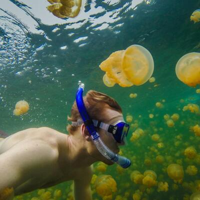 Jellyfish Lake, Palau, Pacific Ocena