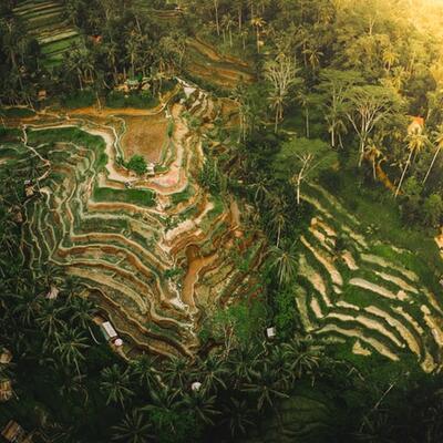 Tegalalang Rice Terrace - Tegalalang, Bali, Indonesia