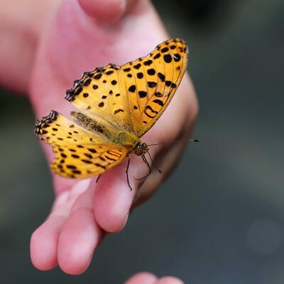 Hold a butterfly on the tip of my fingers