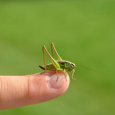 Hold a grasshopper on the end of my finger