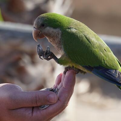 Feed a bird on the palm of my hand