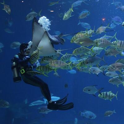 Scuba in an aquarium